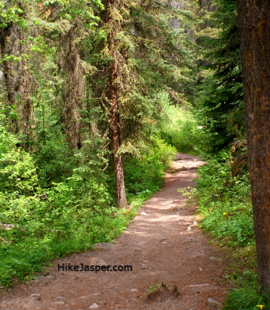 Jasper, Alberta's Horseshoe Lake Hike